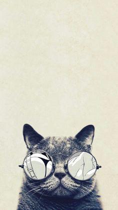 Cool Cat Glasses iPhone 6 Plus HD Wallpaper - Funny iPhone Wallpaper Gallery Cat Phone Wallpaper, Tier Wallpaper, Hipster Wallpaper, Animal Wallpaper, Cool Wallpaper, Glasses Wallpaper, Elephant Wallpaper, Wallpaper Gallery, Wallpapers Android