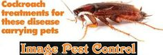 cockroach infestation ,we are providing best cockroach treatment