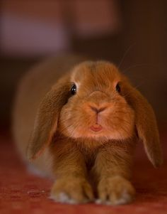adorable bunny face