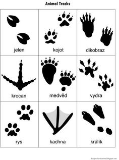 Relentlessly Fun, Deceptively Educational: Animal Tracks Match-Up Nature Activities, Preschool Activities, Gruffalo Activities, Animal Activities For Kids, Animal Games, Animal Coloring Pages, Coloring Pages For Kids, Animal Footprints, Wild Kratts