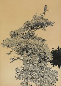 Bruno Liljefors (1860–1939)  Titel English: Peregrine Falcon in treetop Svenska: Pilgrimsfalk i trädtopp TechnikTusche auf Papier Maße51...