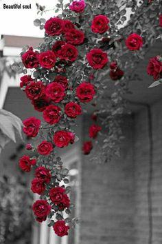 Цветная Фотография, Розовые Почки, Обереги, Цветочные Композиции, Красный Фон, Розы, С Новым Годом, Цветочные Фоны, Белые Цвета