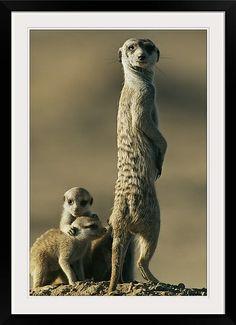 Meerkat Live Cam at Tswalu | Tswalu Kalahari