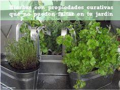 hierbas con propiedades curativas que no deben faltar en el jardín
