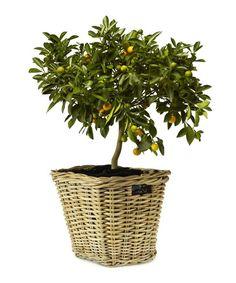 Rustic Garden Cube willow basket, Designer Homeware Sale, Rustic Garden Collection , Secret Sales
