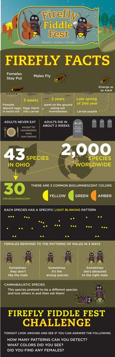Firefly Facts Infographic - visual.ly