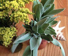Sage - Salvia  Conoce sus beneficios y usos en la cocina