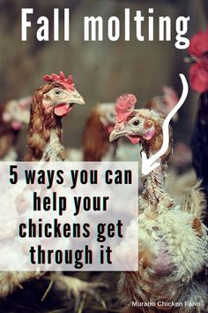 Pet Chickens, Raising Chickens, Chickens Backyard, Healthy Chicken, Hens, 5 Ways, Canning, Autumn, Fall