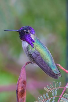 Costas Hummingbird by Alan du Heaume