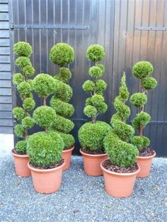 Design of some of the set dressing maybe, don't want plants like these to be overpowering Topiary Plants, Topiary Garden, Topiary Trees, Garden Art, Front House Landscaping, Landscaping Plants, Japanese Garden Design, Garden Landscape Design, Peonies Garden