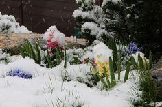 I takhle může vypadat zahrada v dubnu...