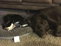 Best buddies. Astro and Bosephus.