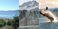 Gustavus Inn at Glacier Bay--homestead lodging, ocean and garden harvest dining since 1965""