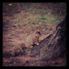 That's a fat one. #chubbysquirrel