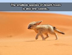 The smallest species...