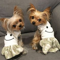 Whenever I see one of these dogs I cringe with horror.