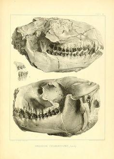 The ancient fauna of Nebraska: Washington,Smithsonian Institution,1853.