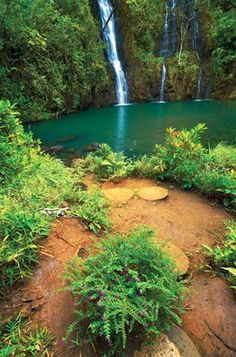 Secret Falls is one of our top favorite destinations of Kauai. Secret Falls is one of our top favorite destinations of Kauai. Kauai Vacation, Hawaii Honeymoon, Hawaii Travel, Vacation Trips, Dream Vacations, Italy Vacation, Vacation Ideas, Oahu, Kauai Hawaii
