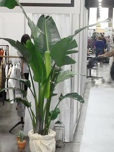 Trade Show Services - Las Vegas - Expo Ease Plant Design, Trade Show, Plant Decor, Special Events, Las Vegas, Plants, Planters, Plant, Planting