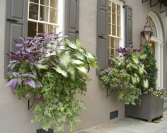 Window boxes bring the garden into the home. Through the windows you can often see beautiful flowers and plants further away from the house, but you may not be able to see plantings near the house. Container Plants, Container Gardening, Container Flowers, Window Box Flowers, Flower Boxes, Window Planter Boxes, Porch Planter, Pot Plante, Garden Windows