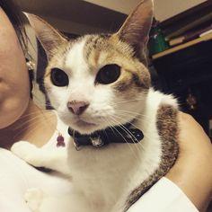 親戚のお家におじゃました。 小さい頃は、家が遠いため、盆正月のみしか会わなかったけど、今は家から1時間半以内に住んでるからたまに遊びに行く。 猫の名前は、ニャッ太。 滅多に触らせてくれないし、 押し入れにすぐ隠れる、そんな恥ずかしがり屋なかわいい猫ちゃん。