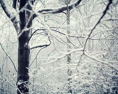 The Story of Snow - Winter Photography, Tree Branches, Magical Woodland Photograph, White, Icy Silver Grey, Enchanting, Magical Fairytale