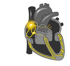 heart animated GIF