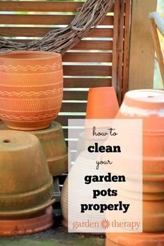 How to properly clean your garden pots and why it's important!