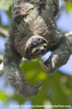 Sloth sanctuary of Costa Rica-  you can stay with them over night!  sign me up!