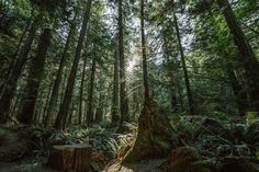 See the Forest for the Trees Zip Line Backyard, Backyard Zipline, Glass Dropper Bottles, Forest Pictures, Gallon Of Water, International Day, Beard Oil, Save The Planet, Go Green