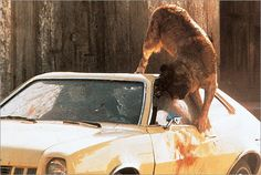 (1983) Cujo...good King movie...the closed up car in the middle of summer was terrifying enough. HOT!
