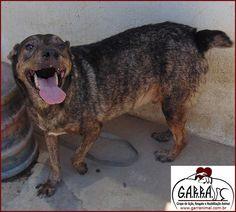 G.A.R.R.A. - Grupo de Ação, Resgate e Reabilitação Animal: Valério nosso Garrinho pede ajuda aos nossos amigo...