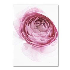 """Trademark Art 'Pink Lady IV' Graphic Art Print on Wrapped Canvas Size: 32"""" H x 24"""" W"""
