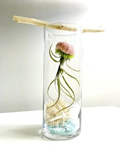 Under the sea terrarium- large glass vase Living decor DIY kit - gift for any oc. - Under the sea terrarium- large glass vase Living decor DIY kit – gift for any occasion- beach dec -