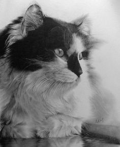 Photo-realistic Pencil Drawings by: Paul Lung  WOW...! Pencil...!