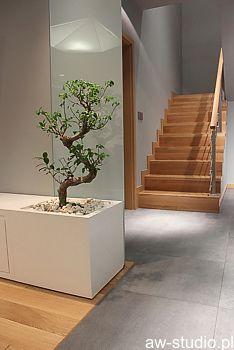 Donica z drzewkiem bonsai
