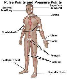 56f9c093ca942dc0727cbf72fa4a5d0e nursing procedures essential oils 7 pulse points of the body pulse rate self diagnosis healthy for