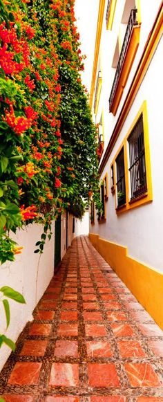 Marbella, Old Town, Spain Portal, Marbella Spain, Puerto Banus, Explore Travel, Spain And Portugal, Modern City, Andalucia, Spanish Style, Spain Travel