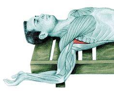 Estiramientos: Guia básica ilustrada de estiramientos. – Gimnasio Rizo Kundalini Yoga, Tai Chi, Smurfs, Stretching, Exercises, Qigong, Pilates, Health, Workout