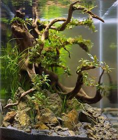 If there was a ‪#‎nobelprize‬ for fish aquarium design, then ‪#‎TakashiAmano‬ would have received it every year. An ‪#‎Aquascape‬ design genius; Amano believed that creating nature is the ultimate luxury for humans. View 21 award winning Surreal ‪#‎FishAquariums‬ made by the master himself.  Must Watch EYE-CANDY for ‪#‎naturelovers‬