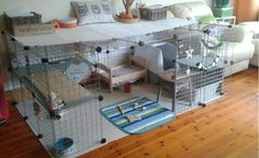 Bobby and Rosies new enclosure made from grids and measuring 6 ft x ft with added levels. Their litter box is covered which helps keep the hay inside. This is so cute, and great thinking on someone's part Diy Bunny Cage, Bunny Cages, Rabbit Cages, House Rabbit, Pet Rabbit, Cavy Cage, Pet Cage, Hamsters, Rabbit Playground