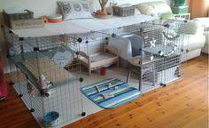 Rosie's indoor rabbit set up.