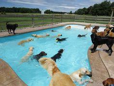 Piscine pour chiens [video] - http://www.2tout2rien.fr/piscine-pour-chiens-video/