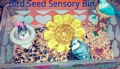 Raising Little Geniuses: Bird Seed Sensory Bin.