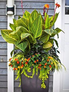 Cannas add height, attractive large leaves and splashes of color to a container. bhg.com
