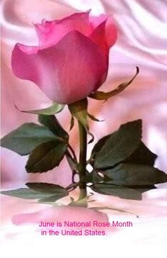 June is National Rose Month