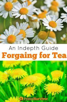 Tea Varieties, Edible Wild Plants, Wild Edibles, How To Make Tea, Edible Flowers, Thing 1, Medicinal Plants, Detox Tea, Herbalism