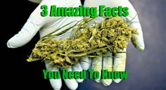 By Steven Bancarz  Drugs are our weakness as a species. There is no denying this. Alcohol, tobacco, sugar, caffeine, cocaine, and cannabis are just some which are most commonly used. Not everyone likes to smoke cannabis, and that's ok. I personally use it very sparingly at a rate of