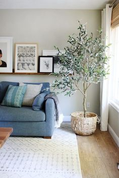Tired of the fiddle leaf fig? Get an olive tree. It's certain to be the indoor tree of 2019.