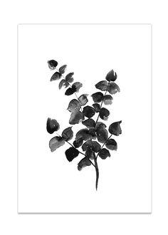 eucalyptus_Rkdesign.jpg